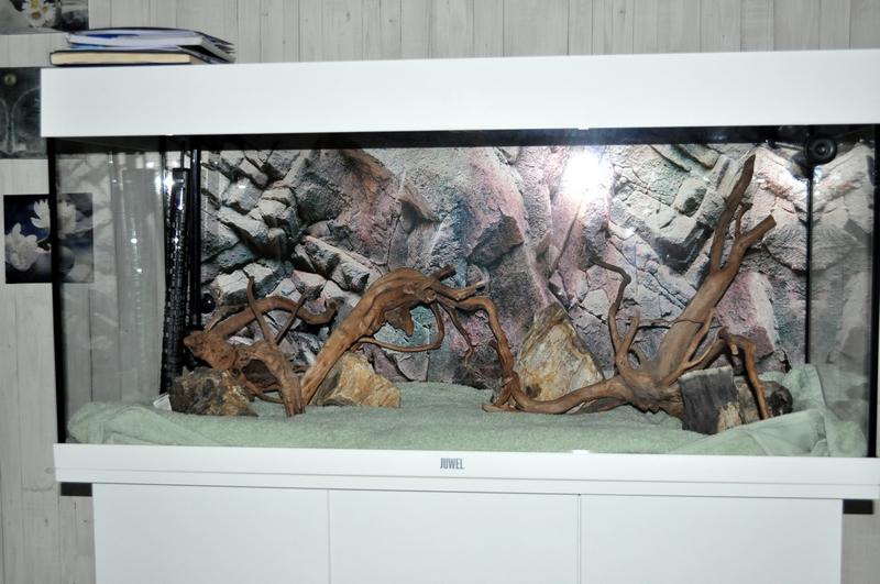 Projet aquarium 180 L Dsc_0021