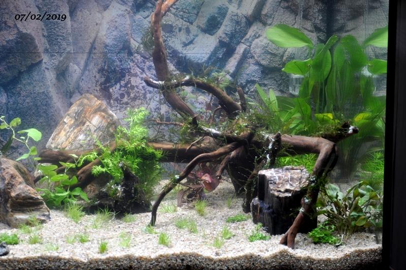 Projet aquarium 180 L Dsc_0022