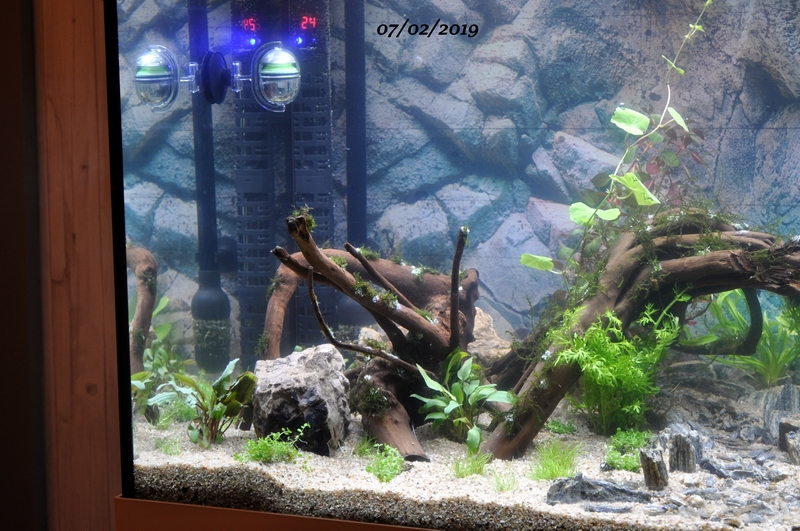 Projet aquarium 180 L Dsc_0023