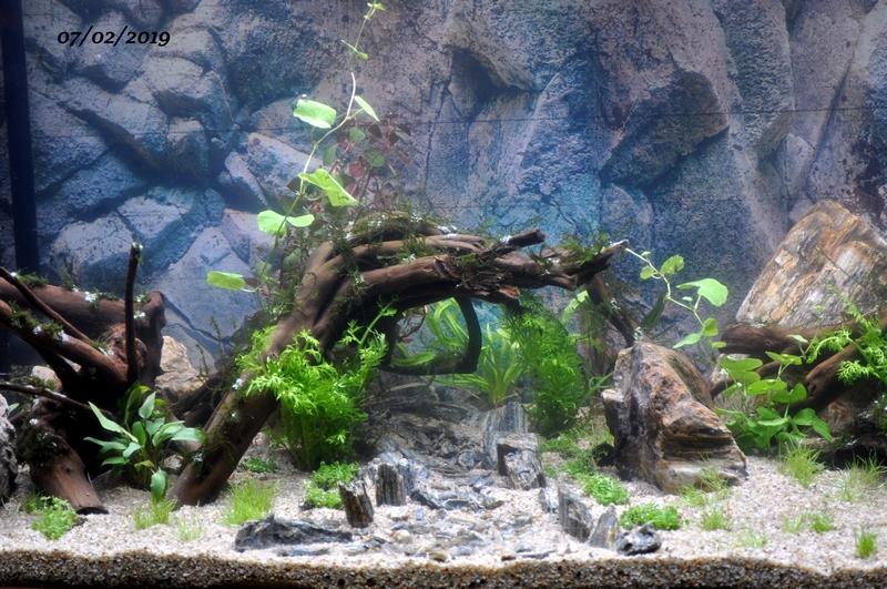 Projet aquarium 180 L Dsc_0024