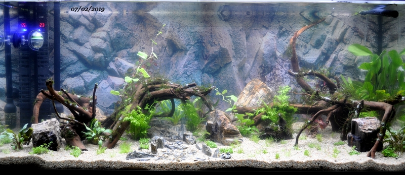 Projet aquarium 180 L Dsc_0025