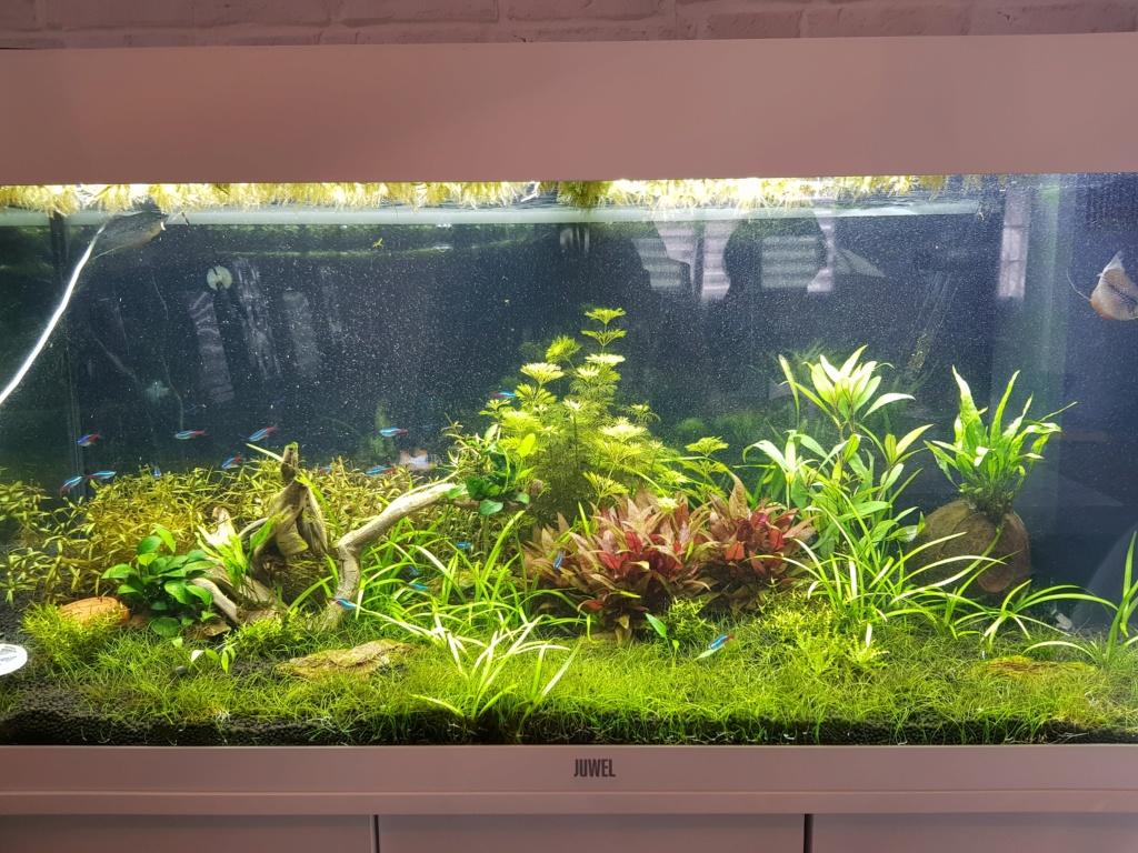 Lutte algue encroûtante et points verts 20190316
