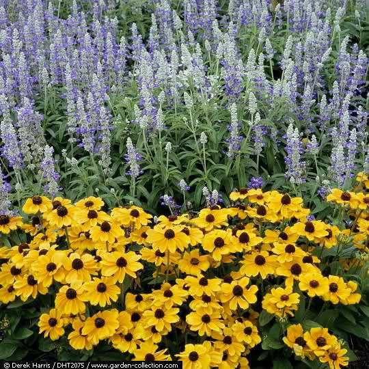 El Arco Iris en el Jardín 123wh110