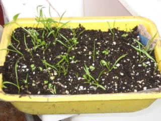 De semillas a futuras plantas 154vwx10