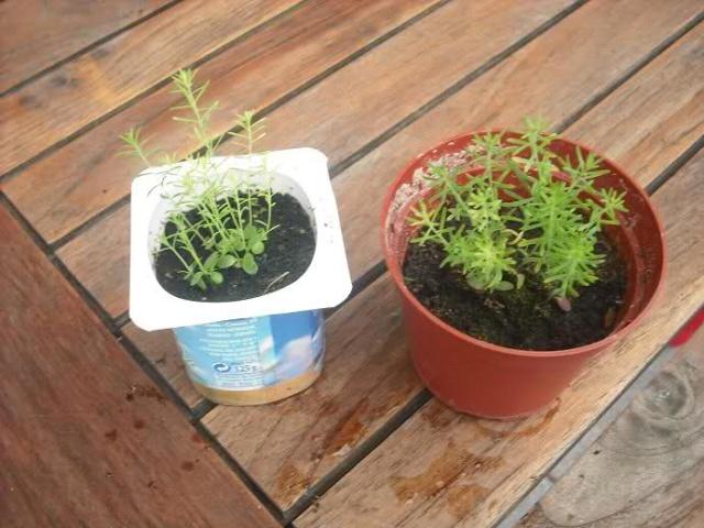 De semillas a futuras plantas - Página 5 16j31u10