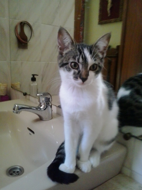 Mía, una gatita linda 1rrmg910
