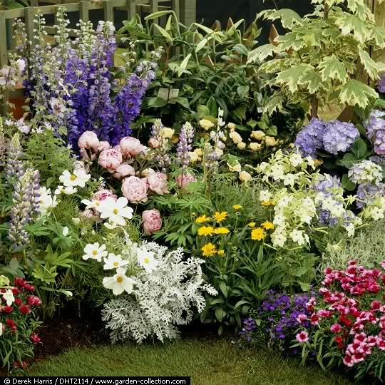 El Arco Iris en el Jardín 20r7cx11