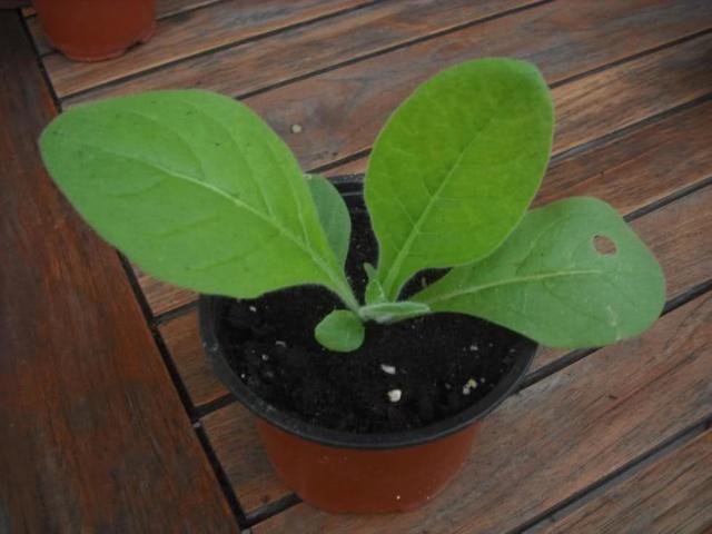 De semillas a futuras plantas - Página 5 21aebr10