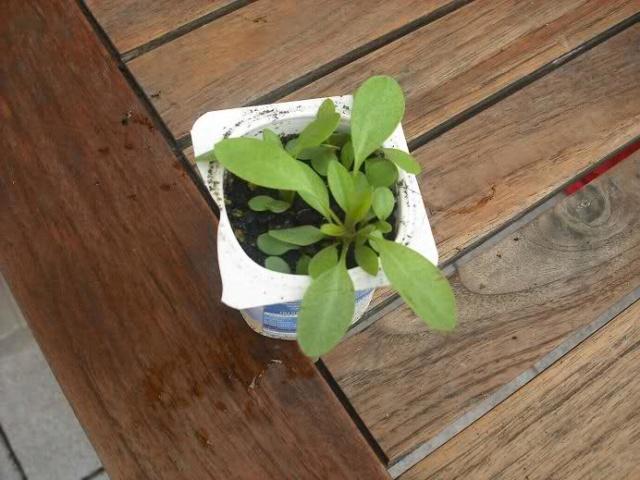 De semillas a futuras plantas - Página 5 25as1u10