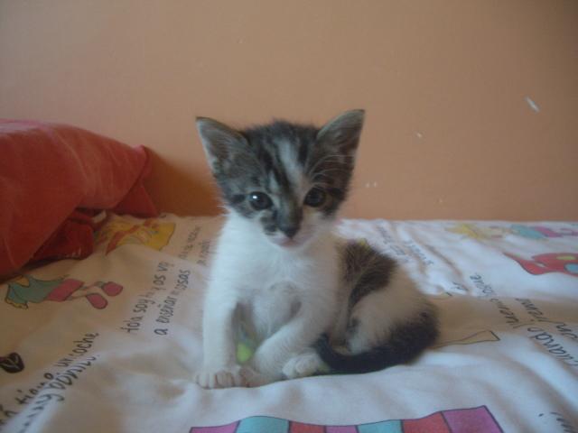 Mía, una gatita linda 25oz8510
