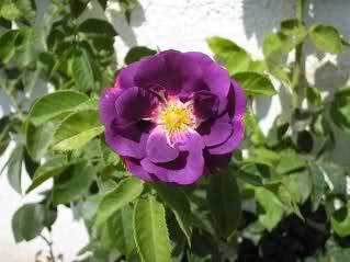 Un sueño.........Mil rosas en mi Jardin - Página 9 281vmm10