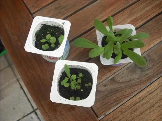 De semillas a futuras plantas - Página 5 288ulx10