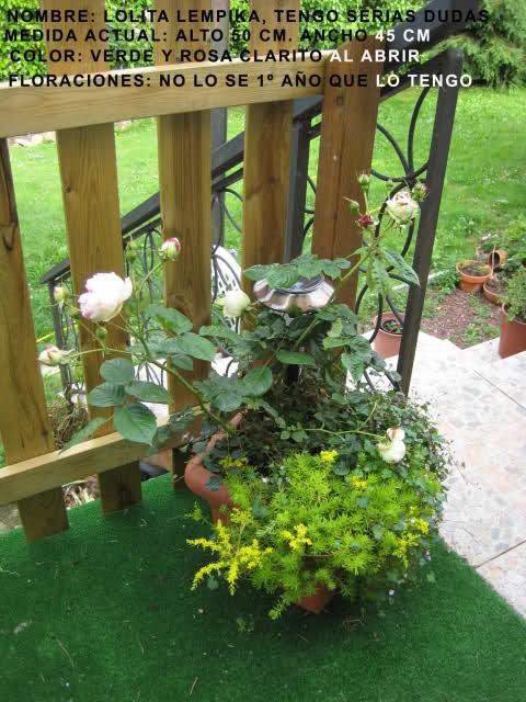 Un sueño.........Mil rosas en mi Jardin 28jb5z10