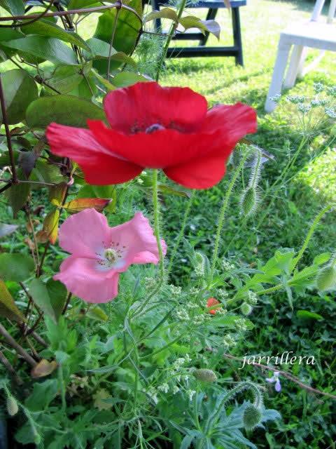 De semillas a futuras plantas 28rpr810