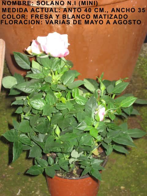 Un sueño.........Mil rosas en mi Jardin 2el4in10