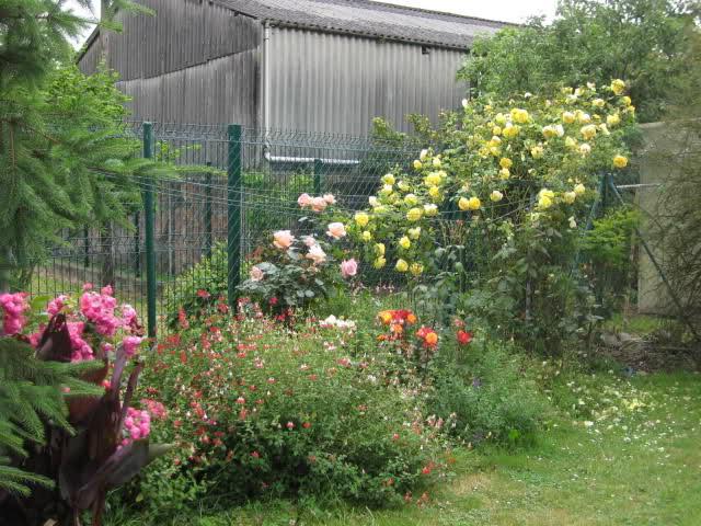 Un sueño.........Mil rosas en mi Jardin - Página 11 2eztgg10