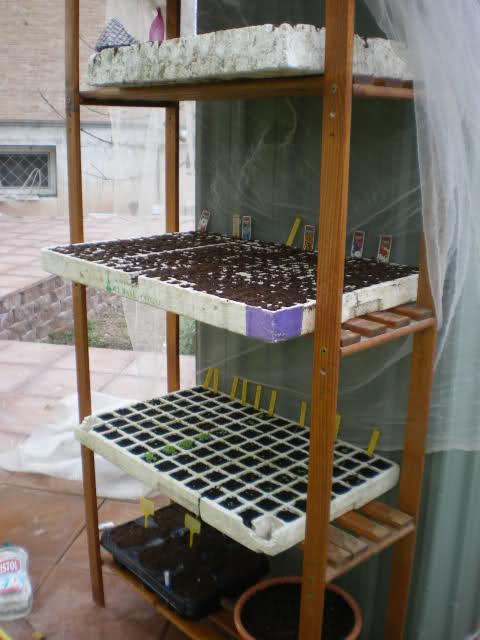 De semillas a futuras plantas - Página 5 2gv8z210