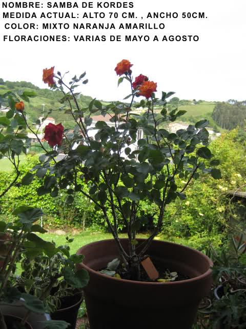 Un sueño.........Mil rosas en mi Jardin 2h4yf510