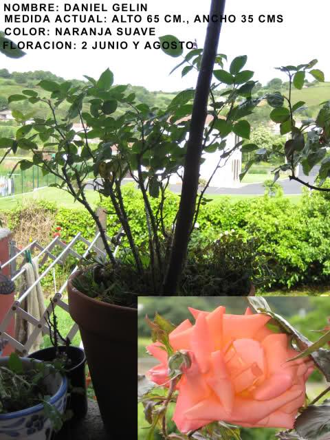 Un sueño.........Mil rosas en mi Jardin 2hflxr10