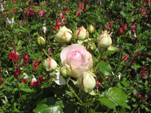 Un sueño.........Mil rosas en mi Jardin - Página 11 2hrd0r10