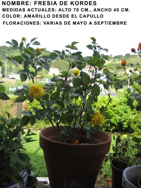 Un sueño.........Mil rosas en mi Jardin 2hwmdk10