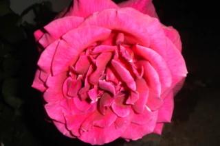 Los rosales de Gom - Página 4 2la96i10