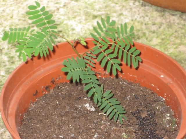 De semillas a futuras plantas - Página 5 2myqgp10