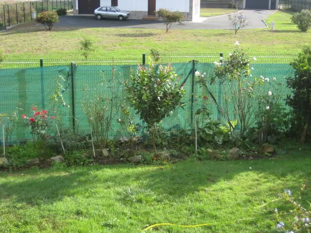 Un sueño.........Mil rosas en mi Jardin - Página 9 2ppa7i10