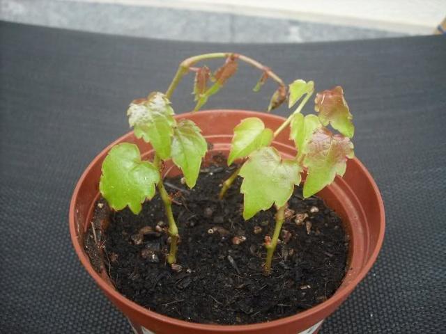De semillas a futuras plantas 2rz5qi10