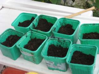 De semillas a futuras plantas 2vinx110