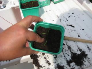 De semillas a futuras plantas 2z4cn710