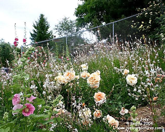 Un sueño.........Mil rosas en mi Jardin 2zsd1g10