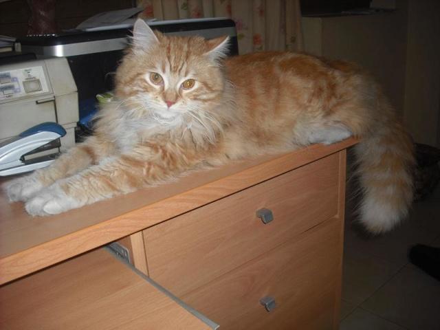 Mi gata Goya - Página 3 331hch10