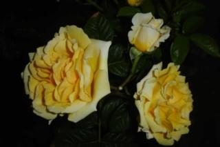 Los rosales de Gom - Página 4 33nj4g10