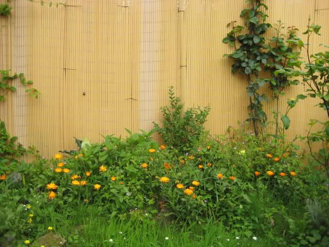Un sueño.........Mil rosas en mi Jardin 34y8p410