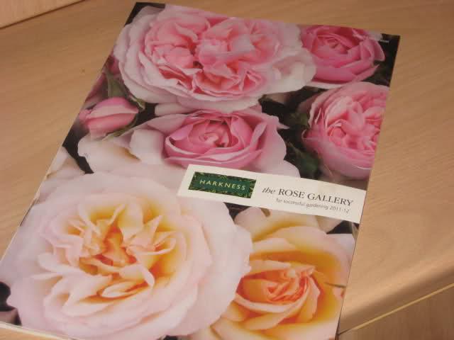 Un sueño.........Mil rosas en mi Jardin - Página 9 6f8avc10