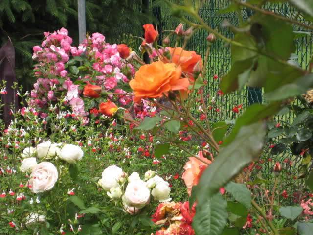 Un sueño.........Mil rosas en mi Jardin - Página 11 Dyazhg10