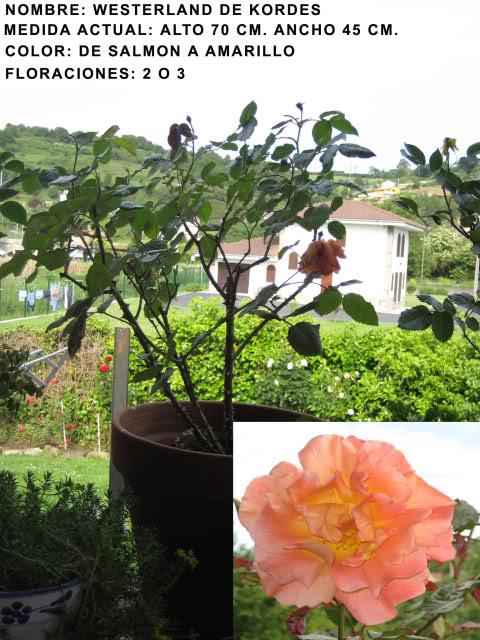 Un sueño.........Mil rosas en mi Jardin Iwuj9x10
