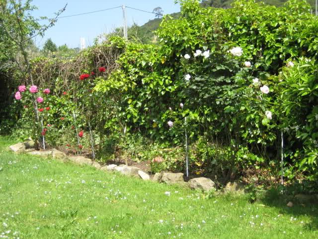 Un sueño.........Mil rosas en mi Jardin Rsr67n10