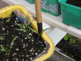 De semillas a futuras plantas Smas9h10