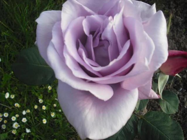 Los Rosales de Epi - Página 3 Voagyt10