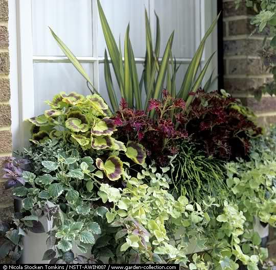 El Arco Iris en el Jardín Xpahba10