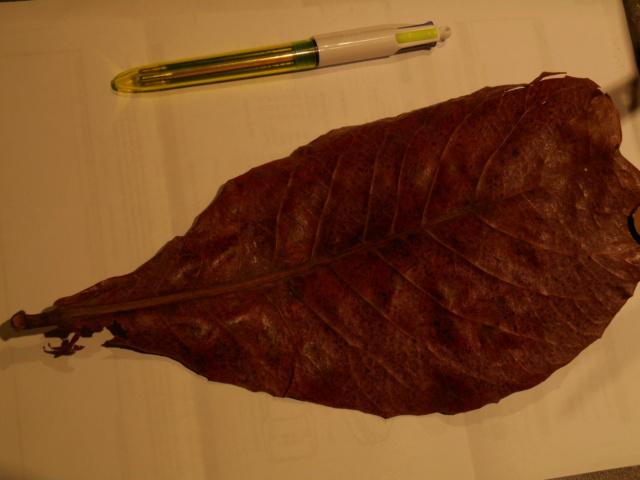 comment utiliser les feuilles de catappa? Dscn0423