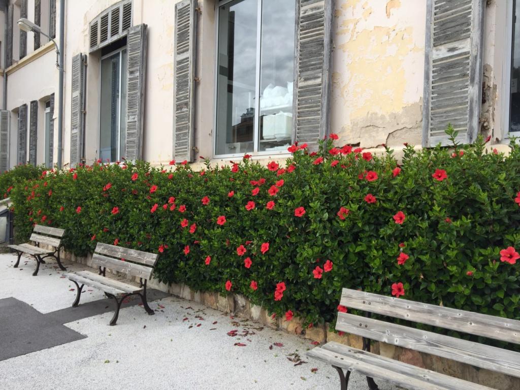 Hibiscus rosa-sinensis et hybrides - conseils - Page 2 Img-4311