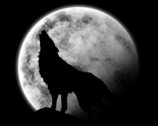 A werewolf means « loup-garou » in french  Pleine10