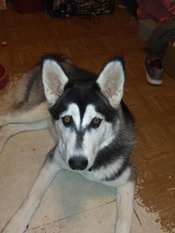 Our sweet Dakota girl  20200718