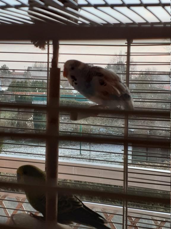 Manque des plumes sur les ailes et la queue 16129710
