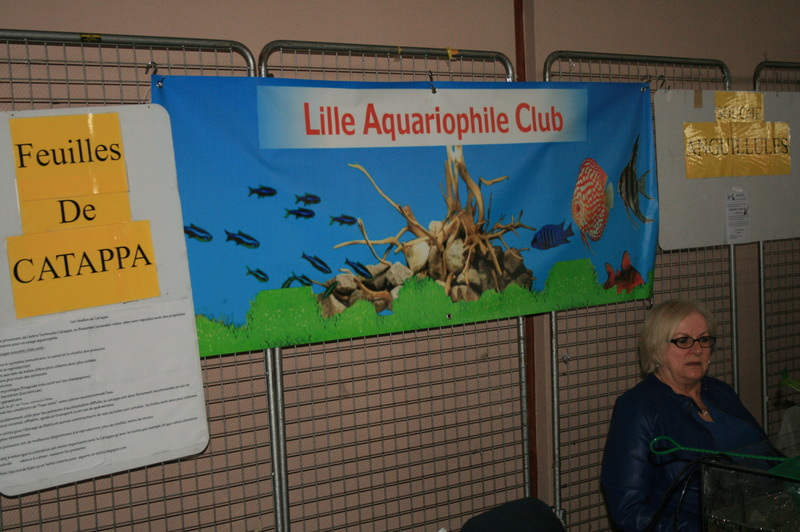 bourse aquariophile courchelettes 2016 Img_9611