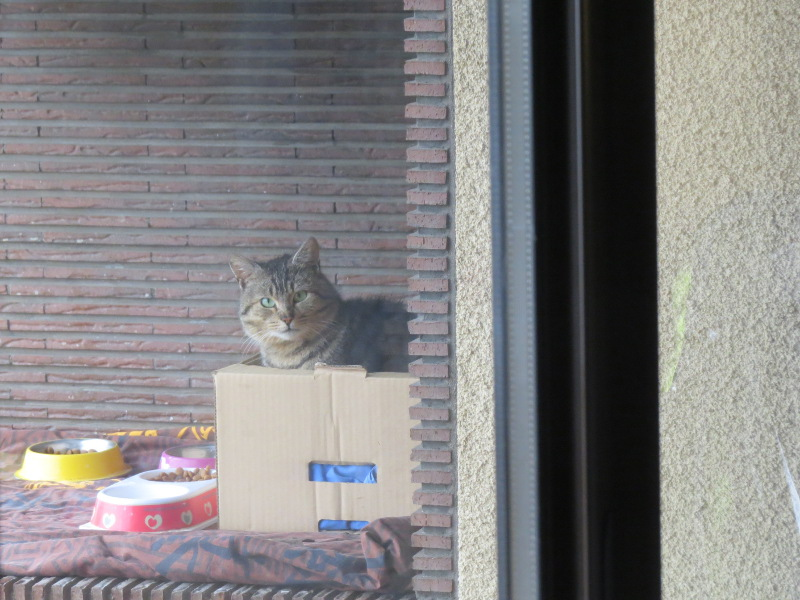 """""""Mes"""" chats ... 08_9_m10"""