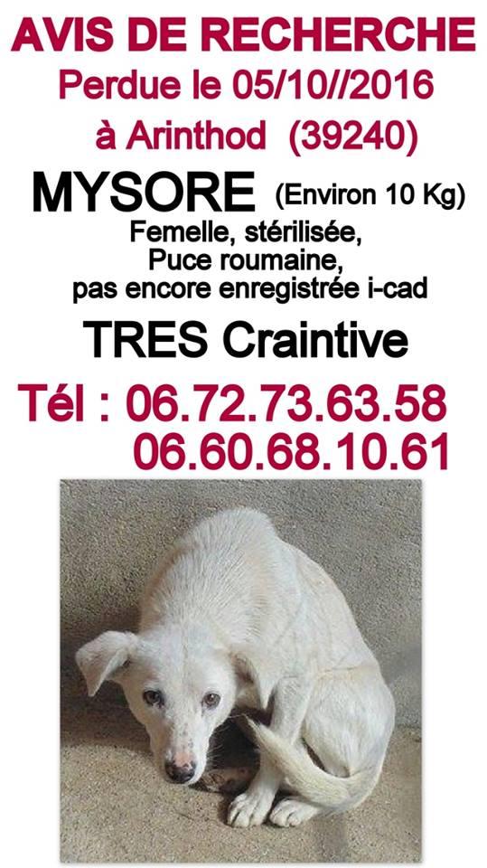 Petite chienne perdue dans le 39 Affich12